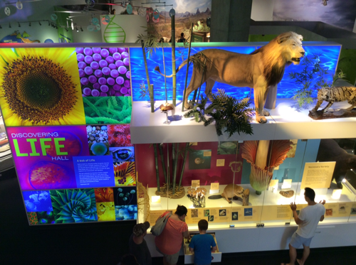 Perot Museum Lion Wall