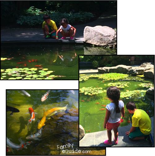 Dallas Arboretum Koi