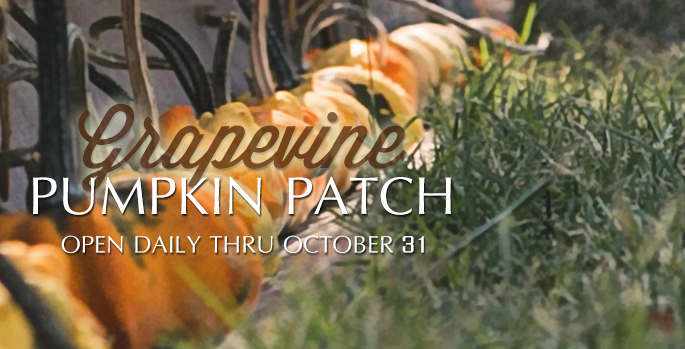 Grapevine Pumpkin Patch