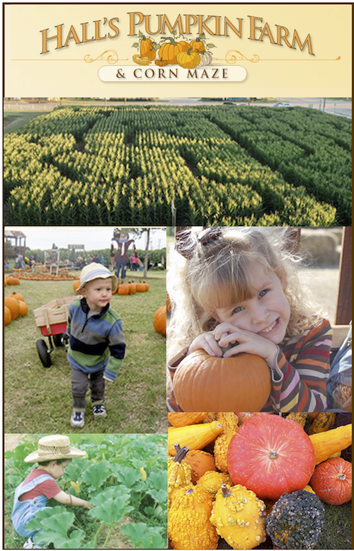 halls-pumpkin-farm-pin