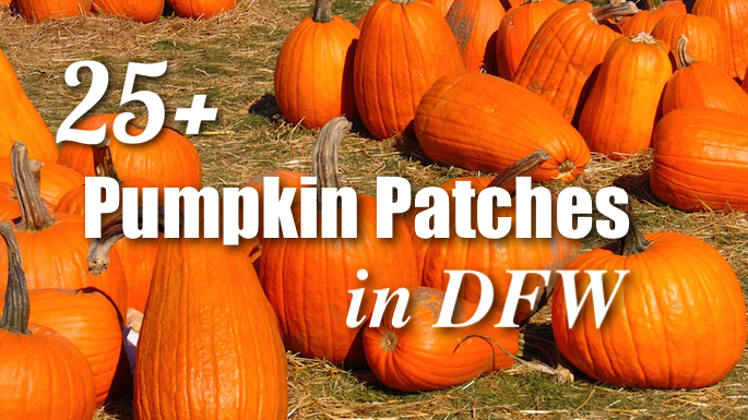 Pumpkin Patches DFW