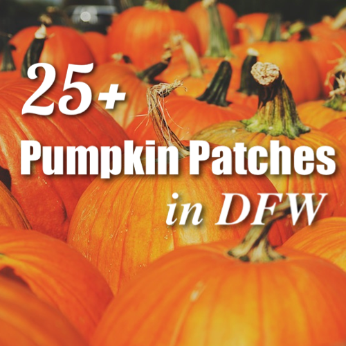 pumpkin-patches-dfw-500