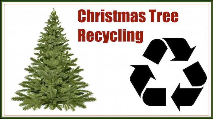 Christmas Tree Recycling Family Eguide