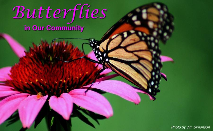 Butterflies Flower Mound