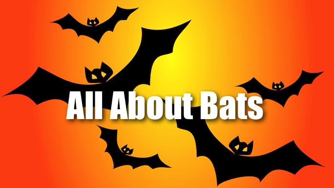 All About Bats Flower Mound Library