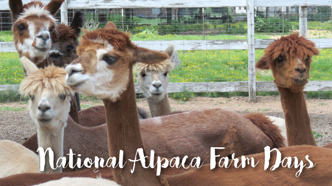 National Alpaca Days