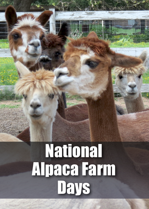 alpaca-farm-pin