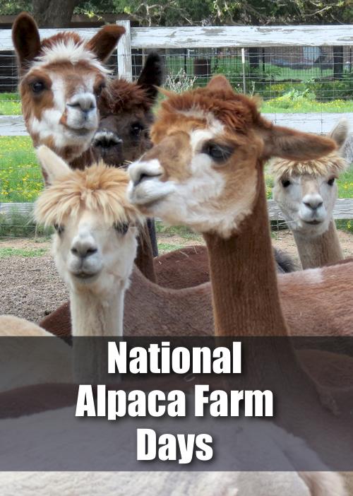 alpaca-farm-pin