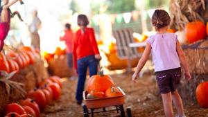 Celebrate Autumn at Calloways @ All Calloways Stores