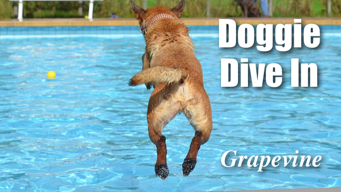 Doggie Dive In Grapevine Banner