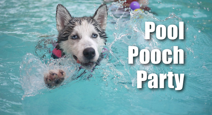 Pool Pooch Party Banner