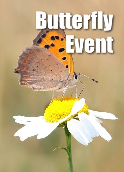 butterfly-event-pin