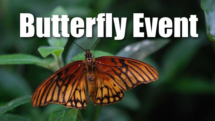 butterfly-evevnt-banner