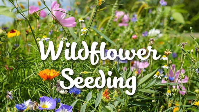 Wildflower Seeding Coppell