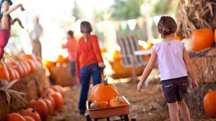 Celebrate Autumn at Calloway's
