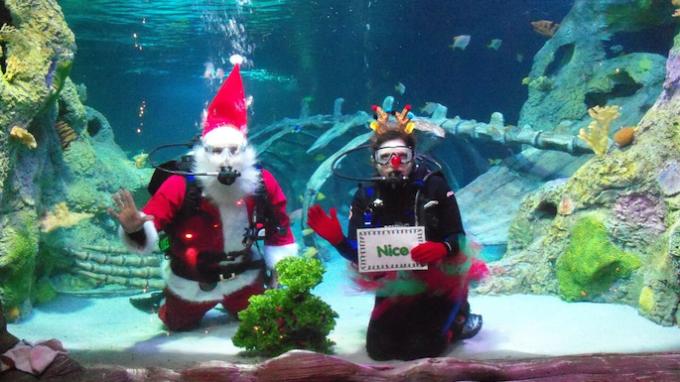 Christmas Event Sea Life Aquarium Grapevine @ Sea Life Aquarium | Grapevine | Texas | United States