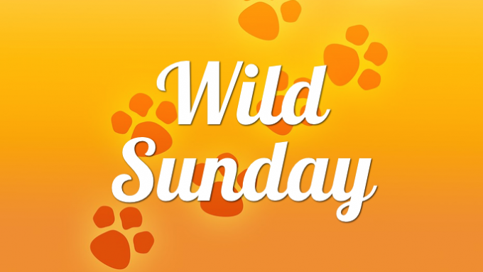 Wild Sundays Coppell @ Biodiversity Education Center   Coppell   Texas   United States