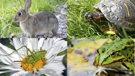 Special Event Biodiversity Education Center