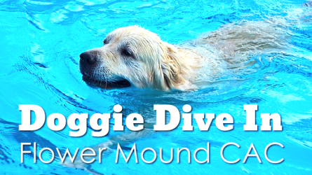 Doggie Dive In Flower Mound CAC