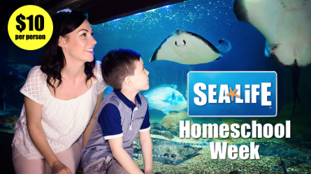 Homeschool Week Sea Life Grapevine