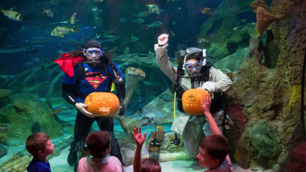 Halloween Events Sea Life Aquarium Grapevine