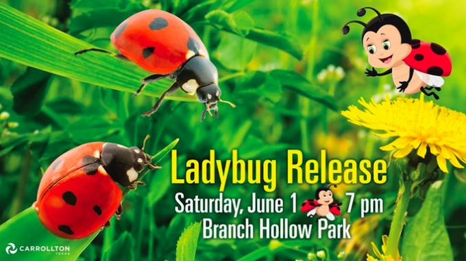 Ladybug Release @ Branch Hollow Park