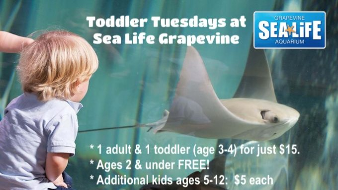 Toddler Tuesday at Sea Life Aquarium @ Sea Life Aquarium