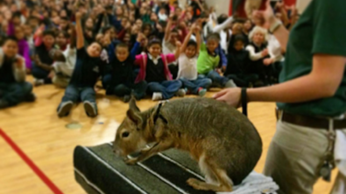 Fort Worth Zoo Comes to Southlake @ Southlake Library